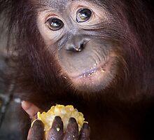 SAVE Orangutan by Orangutans