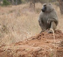 King baboon.  by nathanshanksAUS