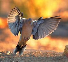 Mourning Dove in Flight by SB  Sullivan
