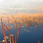 Reeds and Clouds by Alex Call
