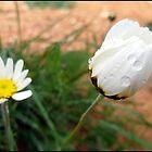 flower's tears  by imenitaful