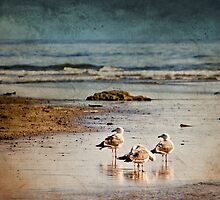 Reflections Of A Seagull Minute by Diane Schuster
