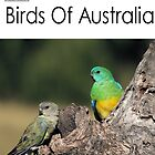 Birds Of Australia Calendar - Number 3 by mosaicavenues