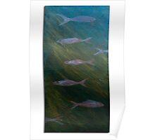 Aqua wildlife Poster