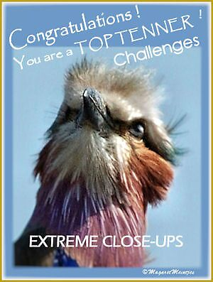 CHALLENGE ENTRY BANNER ONLY by Magaret Meintjes