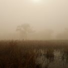 Marshlands  by CKImagery