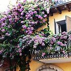 Mediterranean flowers splendour by Art-Motiva