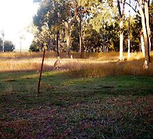 Little Kangaroos at  Mums' Gate by MardiGCalero
