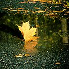 Autumn leaf by marina63