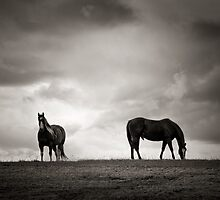 Horses of Dufferin County by Steve Silverman