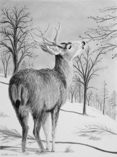 First Buds of Spring - Mule Deer by Heather Ward