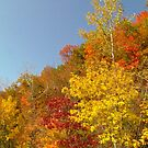 Pretty Autumn Colors by lorilee