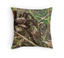 Desert Tarantula~ Morning Stroll  Throw Pillow