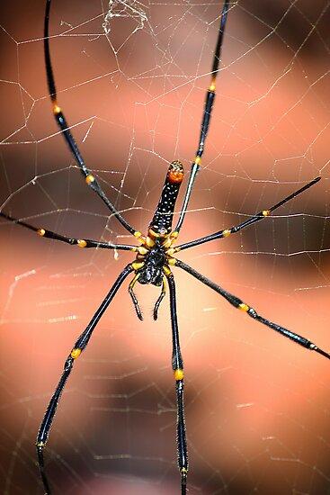 SPIDERMAN by PALLABI ROY
