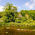 The River Wye at Upperdale  by Rod Johnson