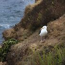 Solitary Seagull by heatherfriedman