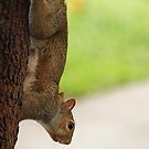 Pregnant Squirrel by Bine