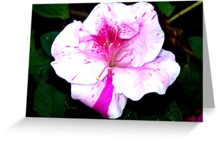 Colorful Azalea Flower by BamaBruce69