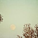 blue moon by beverlylefevre