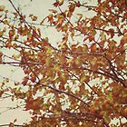this fall day by beverlylefevre