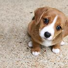 Puppy Dog Eyes by Tiffany Muff