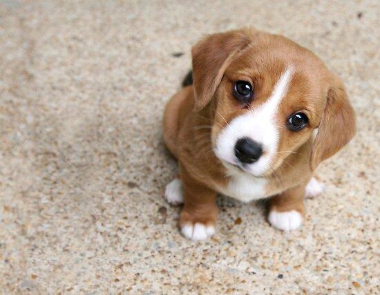 """""""Puppy Dog Eyes"""" by Tiffany Muff   Redbubble"""