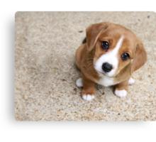 Puppy Dog Eyes Canvas Print