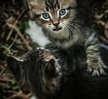 Little Cats by CarloAlby