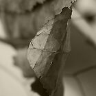 Close Up Of A Large Leaf by Tim Trott