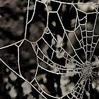 The Tangled Web by Sheila Laurens