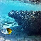 Threadfin butterfly fish by Chris Brunton