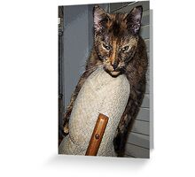What You Saying, I've Done Nothing! Greeting Card