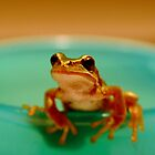 Hello Froggy by Tiffany Muff