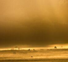 Autumn Dawn by John Dunbar