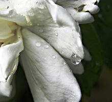Drops of Sweetness by Tisha Clinkenbeard