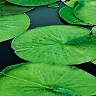 Lily Pads by April Koehler