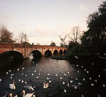 Swans #2 landscape idillic surreal river england by Tara Holland