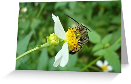 FLOWER WASP IN SPANISH NEEDLES by May Lattanzio