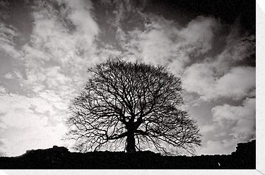 Tree of Triumph - landscape- Kenilworth - Great Britain by Norman Repacholi