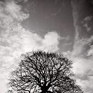 Tree of Triumph - portrait - Kenilworth - Great Britain by Norman Repacholi