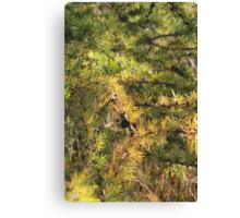 Fall Tamarack Canvas Print