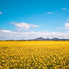 Canola and the Youies! by ImagesbyDi