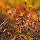 Fall Grass by Lynn Gedeon