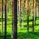 Pine forest by Pauli Hyvönen