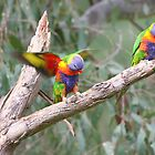 Parrots on a Branch by StuBear22