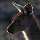 Mt. Lofty Kangaroos Pt.3 by StuBear22