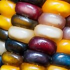 Ornamental Indian Corn Closeup by Kenneth Keifer
