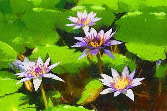 lilly by bogfl