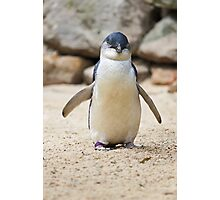 Happy Feet Photographic Print