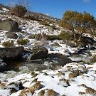 Snowy River by Catherine Davis
